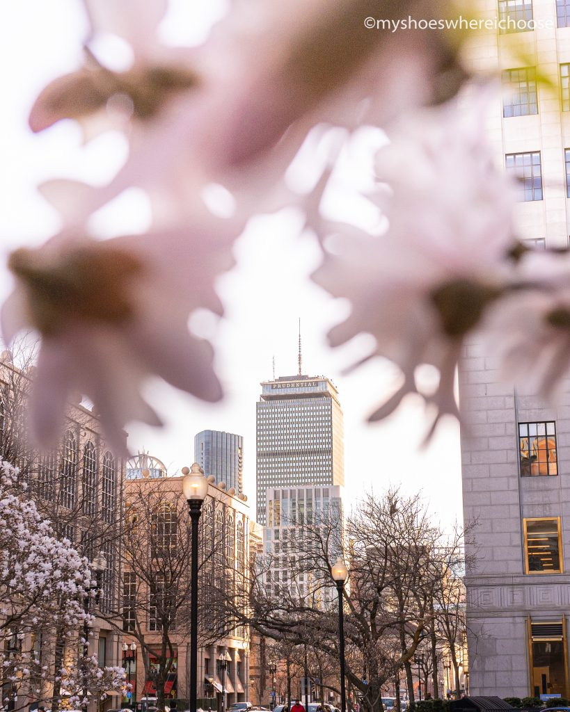 Framing the Prudential building with blossoms