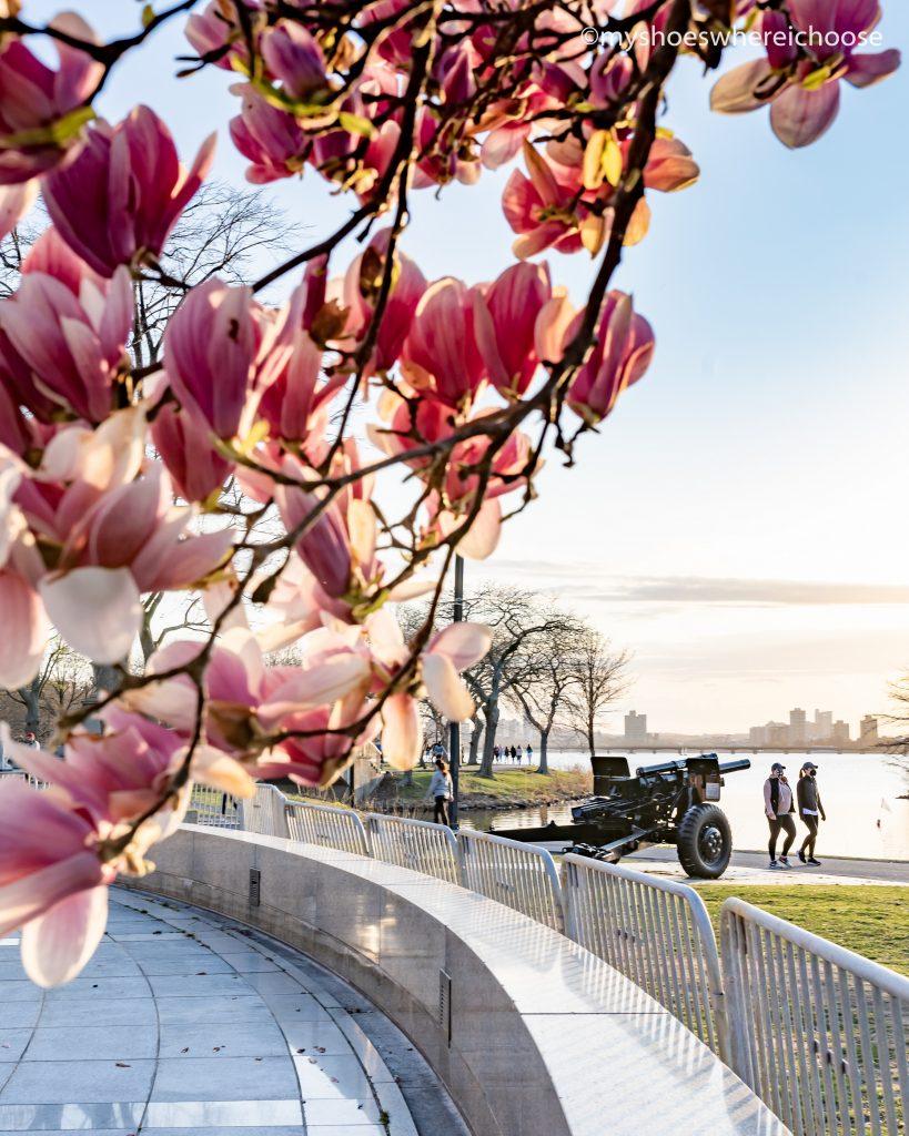 Springtime sunset at Charles River Esplanade Boston