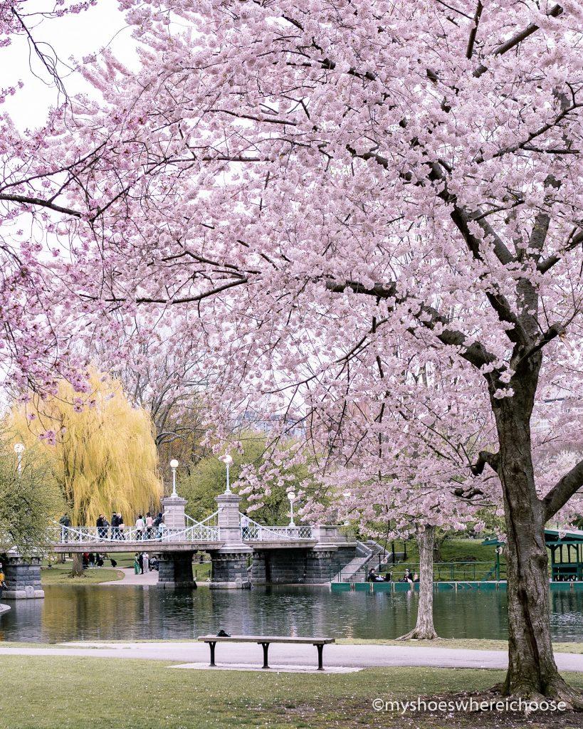 public garden bridge during spring