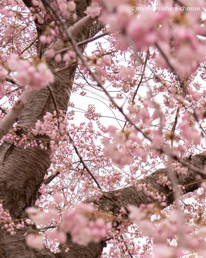 tree with spring blooms